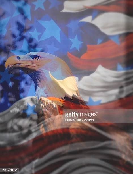 digital composite image of bald eagle and american flag - bald eagle with american flag stock pictures, royalty-free photos & images