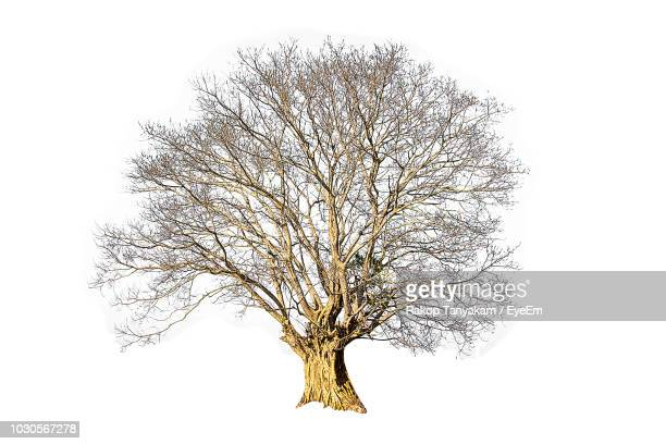 digital composite image of bare trees against white background - bare tree stock pictures, royalty-free photos & images
