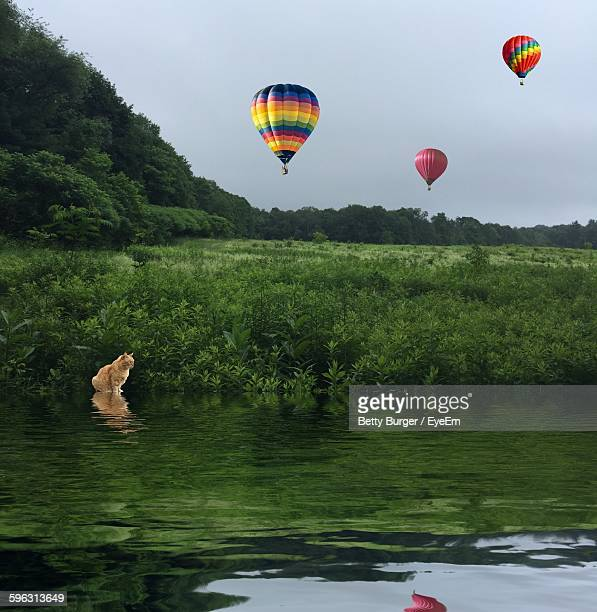 Digital Composite Image Of Cat By River And Hot Air Balloons Above