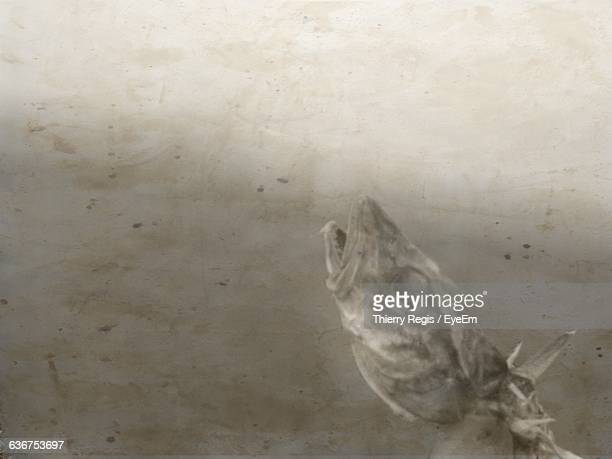 digital composite image of dead fish - fish skeleton stock photos and pictures