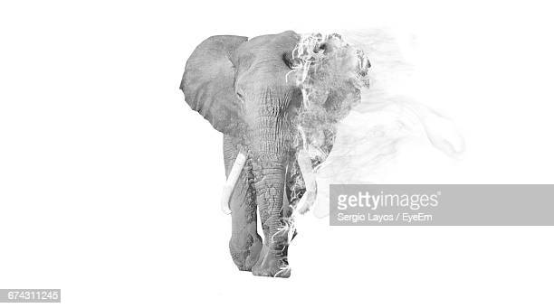 Digital Composite Image Of Elephant On Fire Against White Background