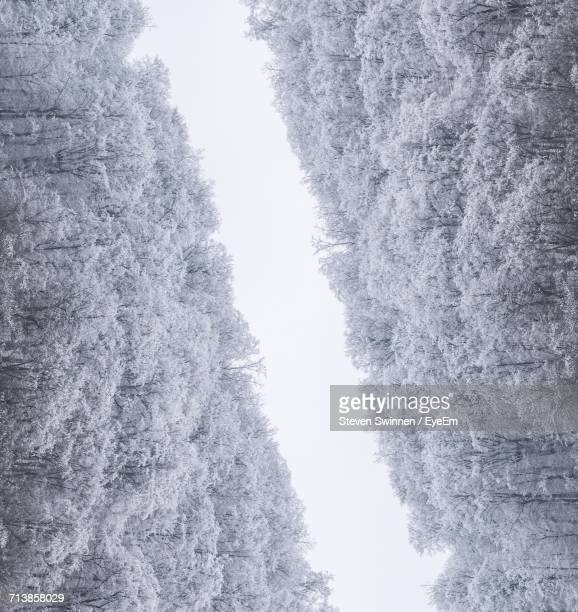 Digital Composite Image Of Forest During Winter