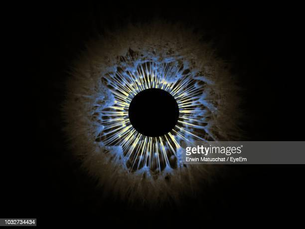 digital composite image of iris against black background - sensory perception stock pictures, royalty-free photos & images
