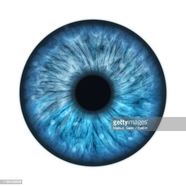 digital composite image of iris against white background - iris eye stock pictures, royalty-free photos & images