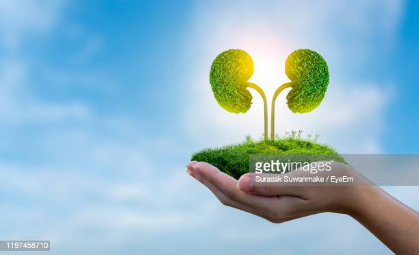 digital composite image of person holding green landscape against sky - human kidney stock pictures, royalty-free photos & images