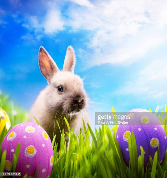 digital composite image of rabbit by easter eggs on grass against sky - easter bunny stock pictures, royalty-free photos & images