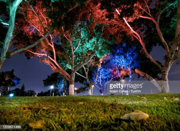 digital composite image of trees on field at night - noam cohen stock pictures, royalty-free photos & images