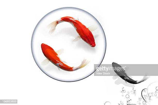 Digital composite of gold fish
