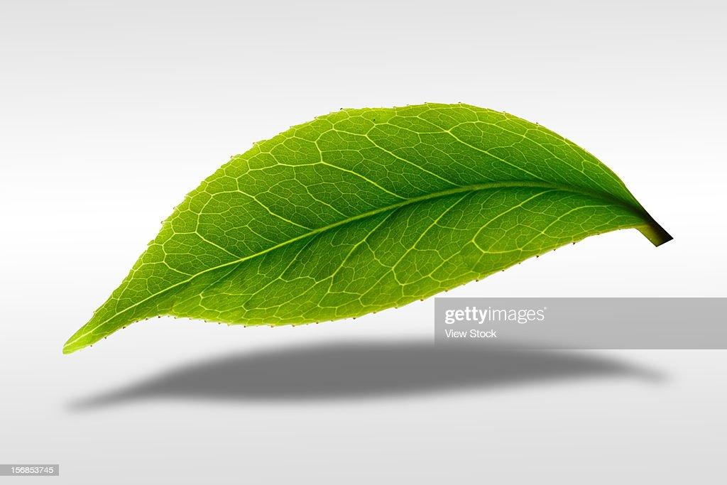 Digital composite of greenn leaf : ストックフォト