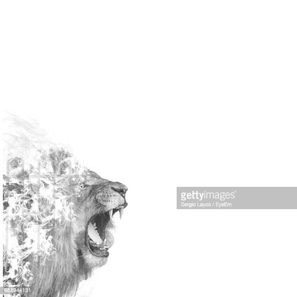 Digital Composite Of Lion And Tree