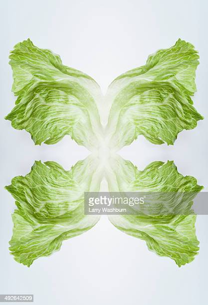 A digital composite of mirrored images of leaves of iceberg lettuce