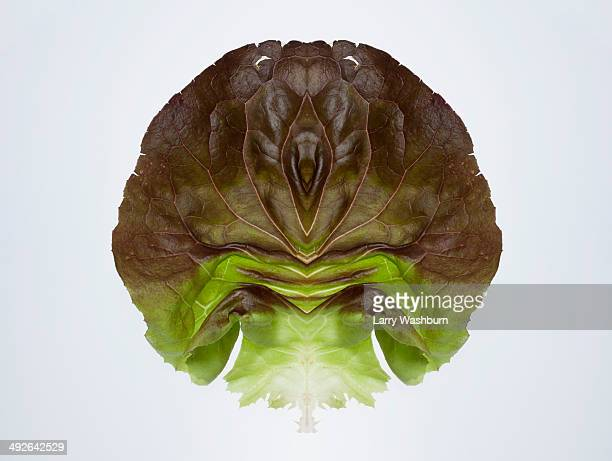 a digital composite of mirrored images of two red leaf lettuce leaves - leaf lettuce stock photos and pictures