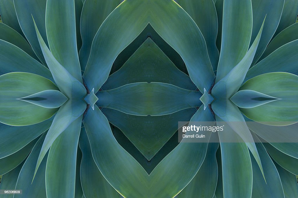 Digital flipping Agave Plant into a design : Foto stock