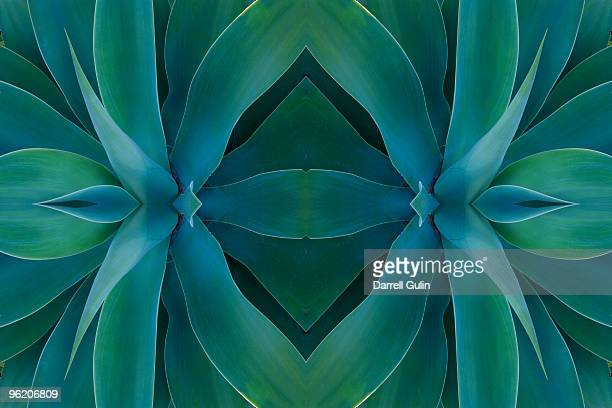 digital flipping agave plant into a design - nature stock pictures, royalty-free photos & images