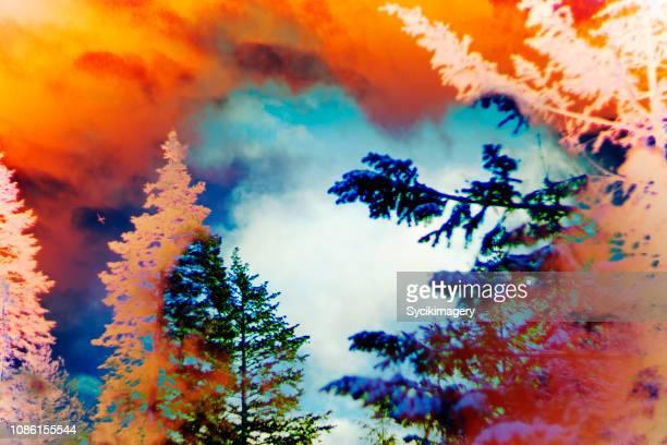 Digital nature composite/art