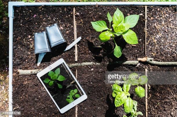 digital tablet and seedlings - montclair stockfoto's en -beelden