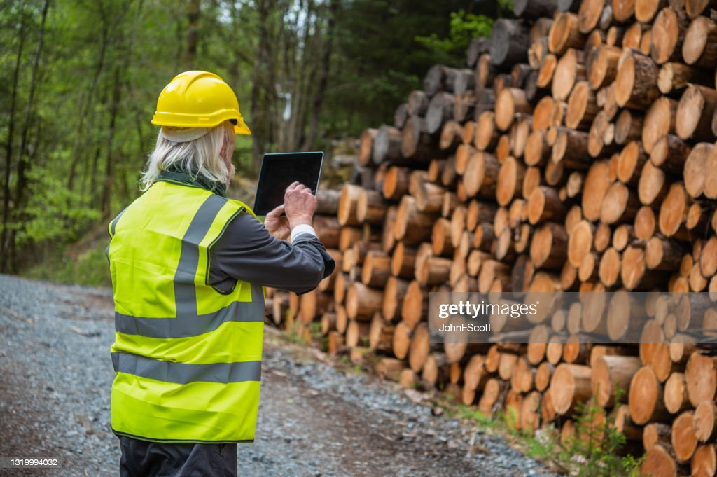 Digital technology used in the lumber industry : Stock Photo