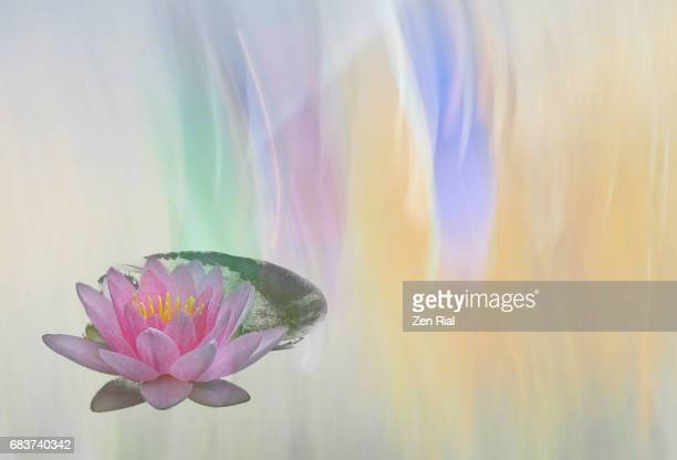 digitally enhanced pink waterlily on multicolored pastel background - zen rial stock photos and pictures