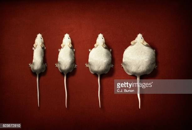Digitally manipulated image of four white mouse on red background
