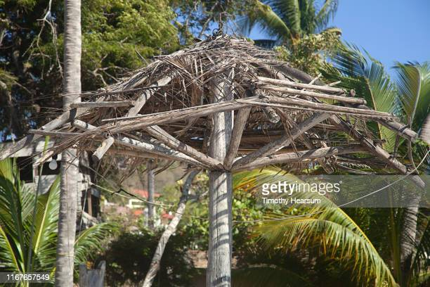 dilapidated framework of old palapa with palm trees beyond; costalegre, jalisco, mexico - timothy hearsum stock pictures, royalty-free photos & images