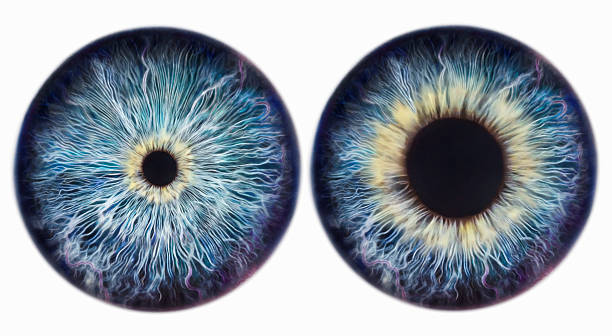 Dilating Iris Wall Art
