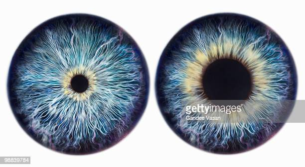 dilating iris - eye stock pictures, royalty-free photos & images