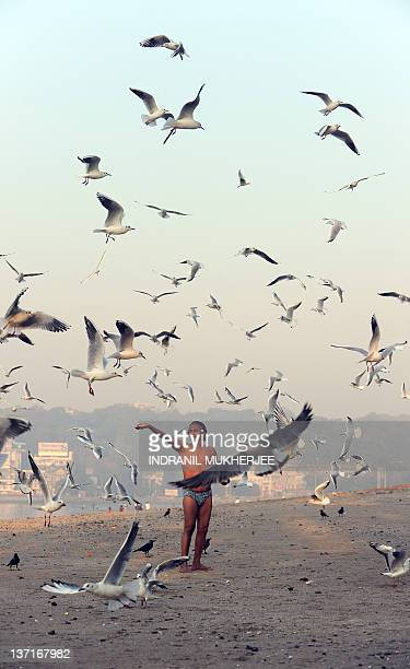 Dileep Mahtre feeds seagulls at the Chowpatty beach in Mumbai on January 16 2012 Mahtre has for the past ten years fed migratory birds arriving from...