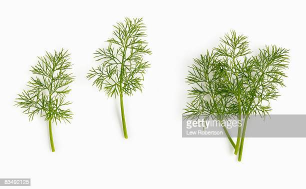 Dill weed on white