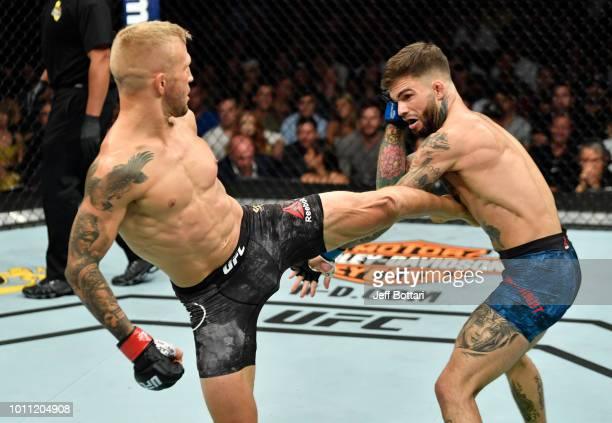 TJ Dillashaw kicks Cody Garbrandt in their UFC bantamweight championship fight during the UFC 227 event inside Staples Center on August 4 2018 in Los...