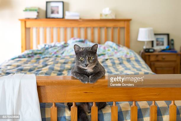Dilute tortie cat sitting at the foot of a bed