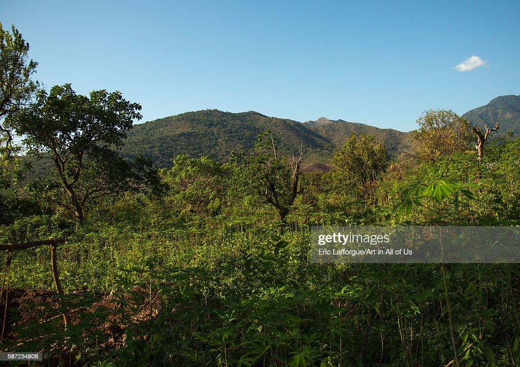 Dime tribe farm, Omo valley, Hana mursi, Ethiopia : Nachrichtenfoto