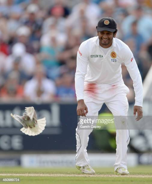 Dimuth Karunaratne of Sri Lanka chases a pigeon from the pitch during day two of 2nd Investec Test match between England and Sri Lanka at Headingley...