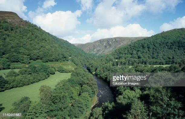 Dinas and Gwenffryd RSPB Reserves hanging oak woods Wales