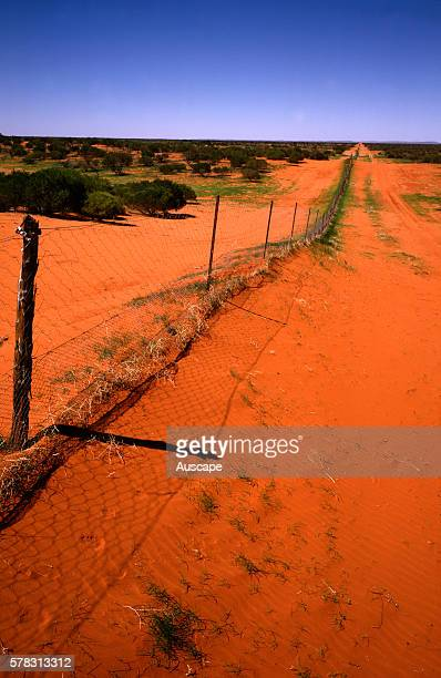 Dingo Fence Canis dingo preventing Dingos entering NSW from Queensland Border of New South Wales with Queensland Australia
