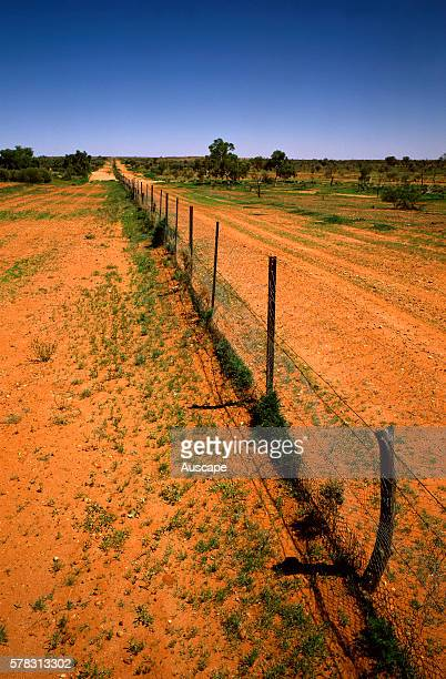 Dingo Fence excluding Dingos Canis dingo from grazing lands The world's longest fence 5614 km It reaches 30 cm underground Border of New South Wales...
