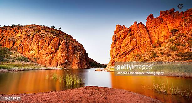 dingo howling - territorio del norte fotografías e imágenes de stock