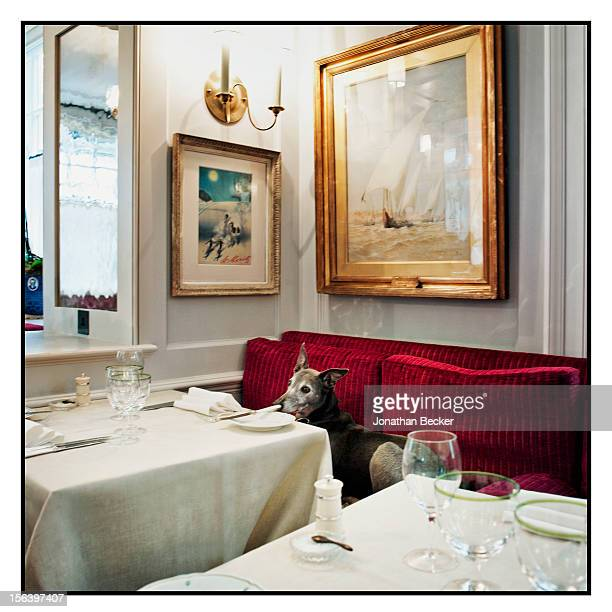 A dining room is photographed at 5 Hertford Street which is the home of nightclub Loulou's for Vanity Fair Magazine on June 11 2012 in London England