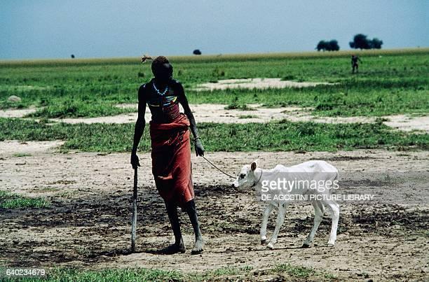Dinka man leading a calf South Sudan