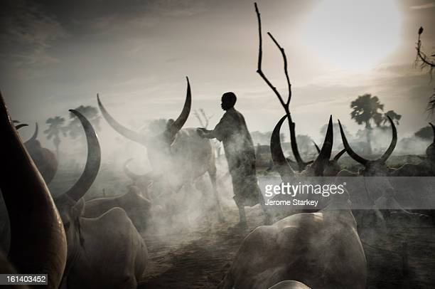 Dinka tribesman in South Sudan tends his cattle at a temporary camp north of Rumbek in Lakes State Oct 26 2012 Under customary law cattle are used...