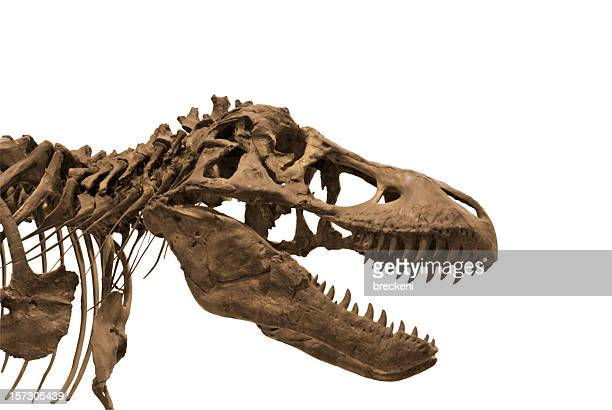 dinosaur 3 - dinosaur stock pictures, royalty-free photos & images
