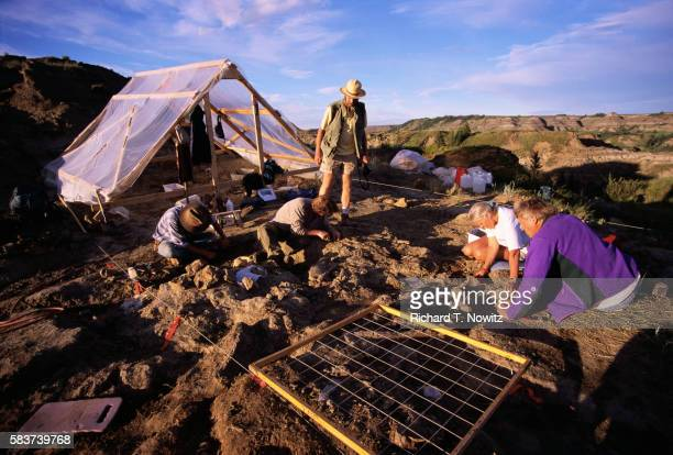 dinosaur dig site - archaeology stock pictures, royalty-free photos & images