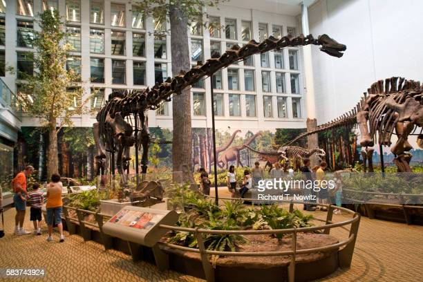 dinosaur exhibit at carnegie museum in pittsburgh - diplodocus stock pictures, royalty-free photos & images