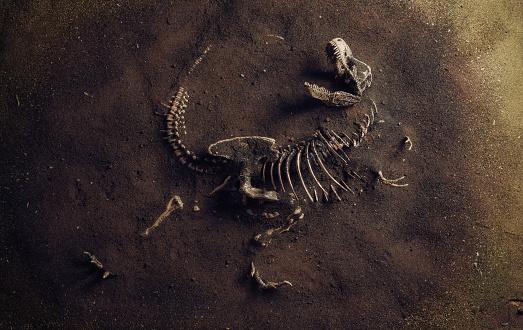 Dinosaur Fossil (Tyrannosaurus Rex) Found by Archaeologists 1187632820
