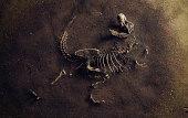 Dinosaur Fossil (Tyrannosaurus Rex) Found by Archaeologists