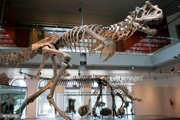 Dinosaur Hall Natural History Museum