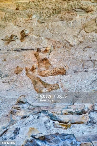 dinosaur national monument colorado/utah - arqueología fotografías e imágenes de stock