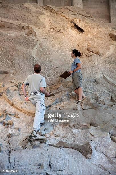 Dinosaur National Monument volunteer scientists inspect bone beds