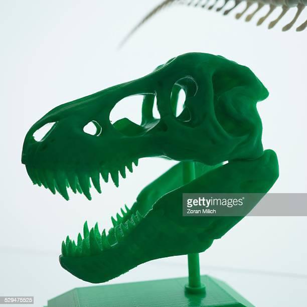 Dinosaur skeleton head made with plastic on a 3D printer