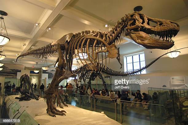 Dinosaur skeleton T Rex bones in the Museum of natural history New York