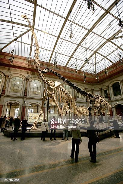 GERMANY BERLIN Dinosaurs in the museum of natural history Berlin Our picture shows the dinosaur skeleton of the Brachiosaurus brancai